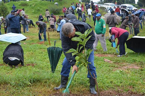 مردم اتیوپی در عرض 12 ساعت 350میلیون درخت کاشتند!