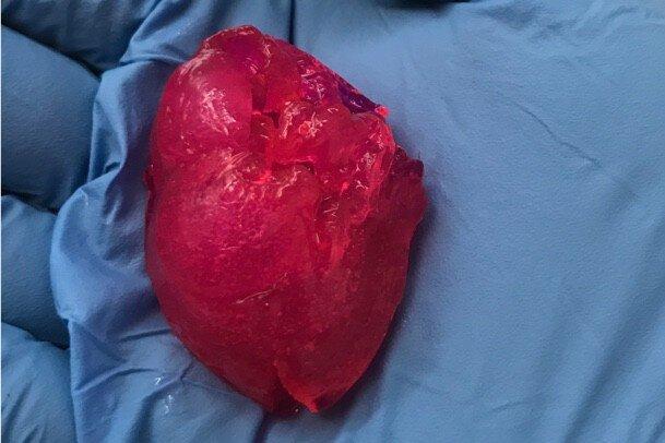قلب مینیاتوری با پرینتر زیستی فراوری شد