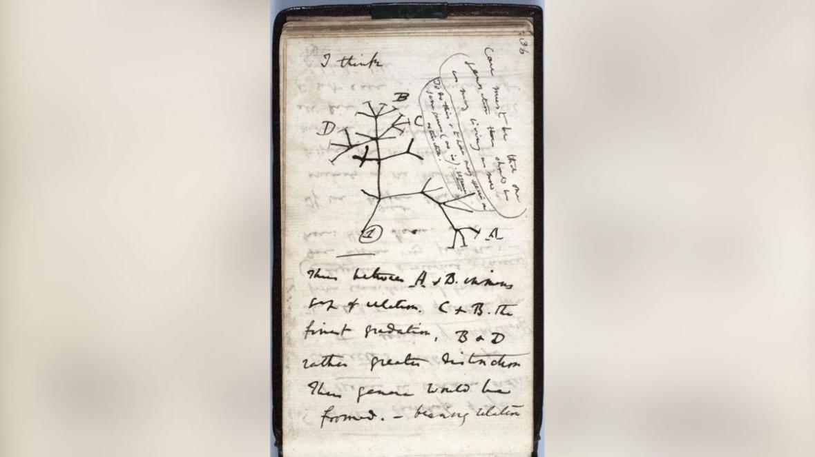 دو دفترچه معروف داروین به سرقت رفته